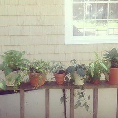 Sunday is watering day. I'm trying to be a more responsible plant owner. we'll see how this goes.