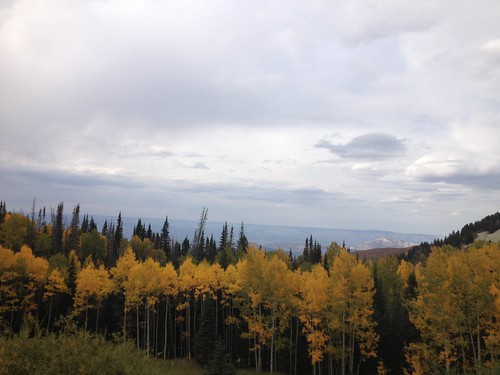 Fall Colors on the Grand Mesa
