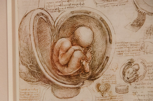 Leonardo da Vinci's Embryological Drawings of the Fetus