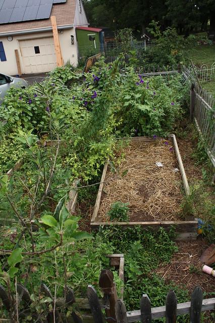 Messy End-of-Summer Garden