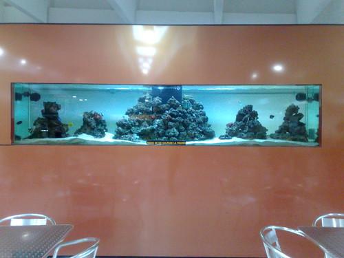 Pecera marina en el Parian
