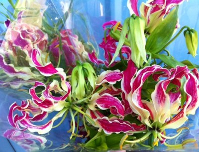 gloriosa lily flowers