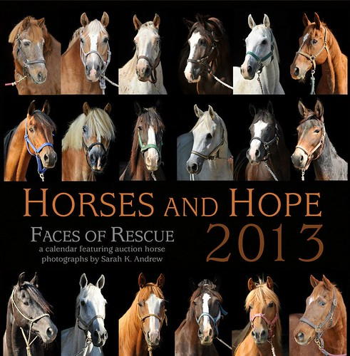 Horses and Hope: Faces of Rescue