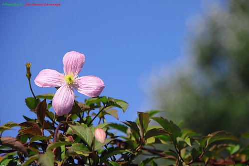 Flor #Photography 2