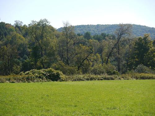 First field