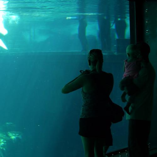 Under the Sea 0278 by mliu92