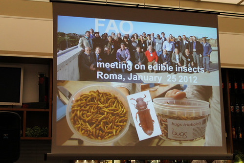 Meeting on edible insects