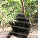 Mefou Primate Sanctuary impressions, Cameroon - IMG_2518_CR2_v1