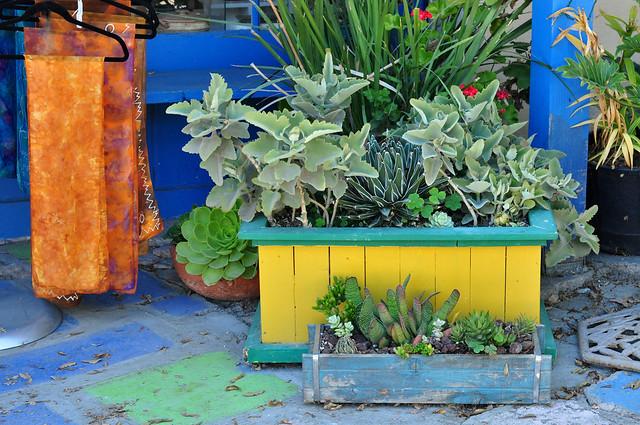 Succulents & Scarves