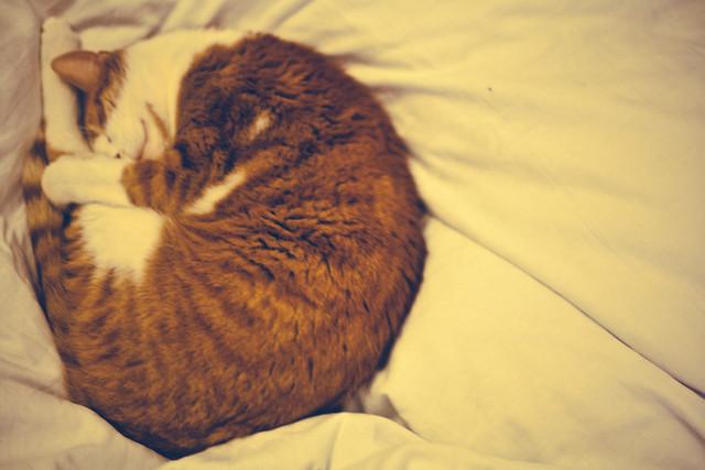 Mozart sleeping