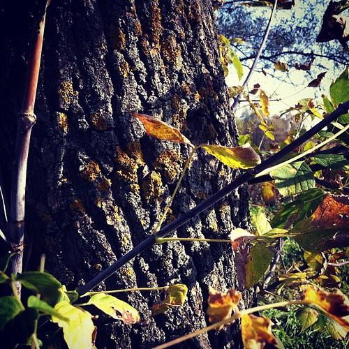 Autumn in Ukraine