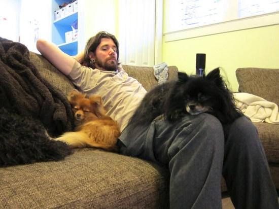 Husband & Dogs