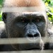 Mefou Primate Sanctuary impressions, Cameroon - IMG_2508_CR2_v1