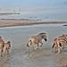 Etosha National Park impressions, Namibia - IMG_3263_CR2_v1