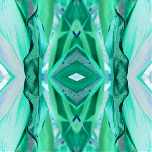 dracaena-kaleidoscope-inverted-w