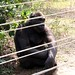 Mefou Primate Sanctuary impressions, Cameroon - IMG_2500_CR2_v1