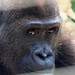 Mefou Primate Sanctuary impressions, Cameroon - IMG_2503_CR2_v1