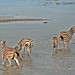 Etosha National Park impressions, Namibia - IMG_3262_CR2_v1