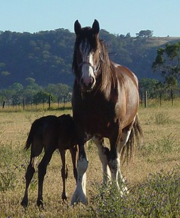 A Clydie mum and TB baby.