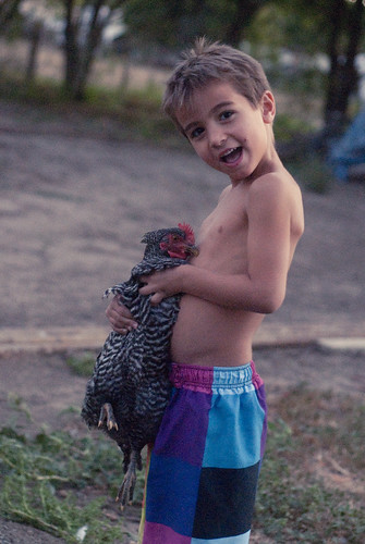 chickenherding-31