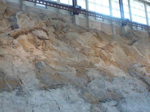 9-3-12 UT - Dinosaur National Monument 52