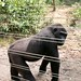 Mefou Primate Sanctuary impressions, Cameroon - IMG_2498_CR2_v1