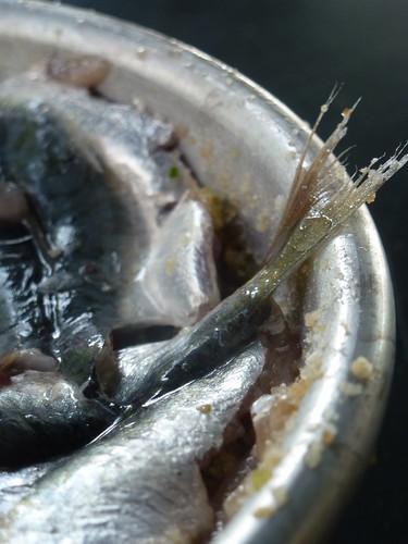 Sardine cake - Tortina di sardine