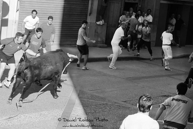 Toro con soga 15092012