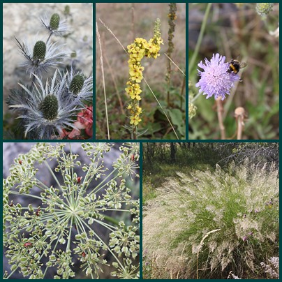 St-Ours-alpine-flowers-grasses