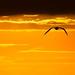 Silecroft Sunset | Letterbox Crop Versions [Explored]