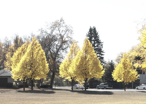 Glowing Yellow Trees