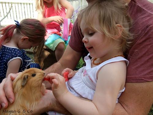 Guinea pigs (2)