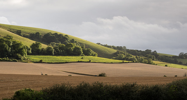 Afternoon sun on the South Downs