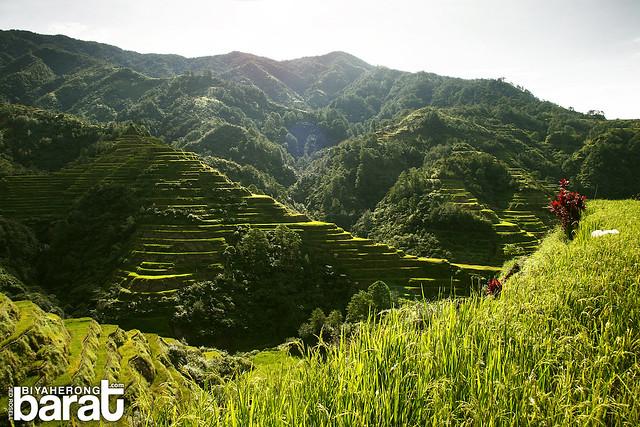 Walking in the rice fields NFA Banaue Rice Terraces