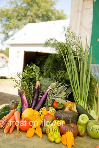 20120929-harvestfest-6.jpg