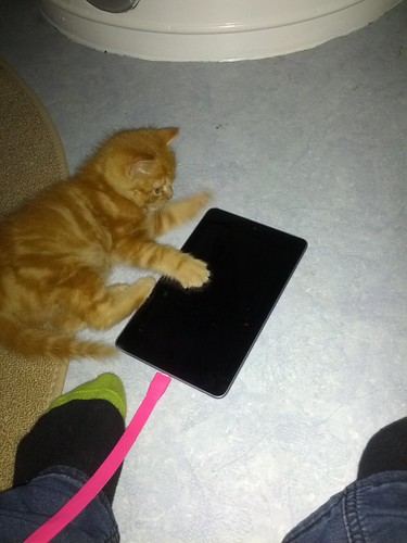 Caturday On Nexus 7