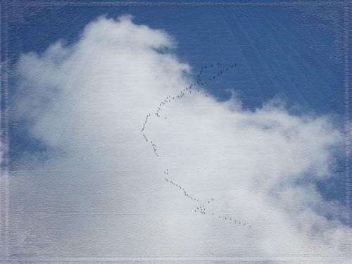 pdpa-flyways-in-the-sky-w