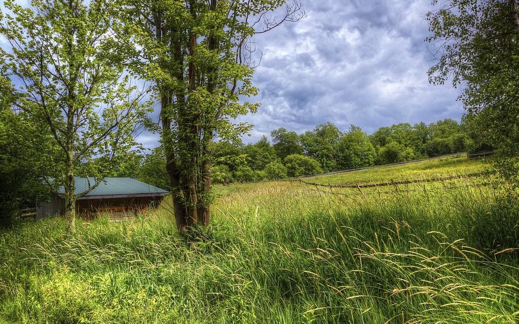 Hillside Paddock
