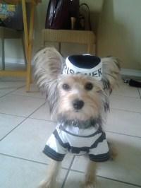 Prison Dog Costume | Flickr - Photo Sharing!