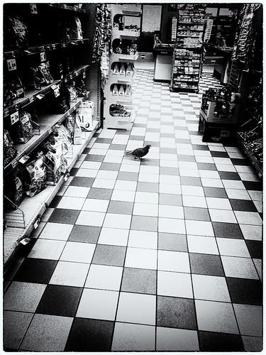 Piccione...consumatore