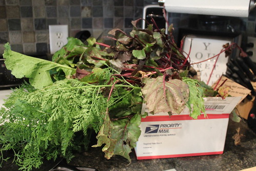 20121005. Root veggie backyard (ad front yard) haul.