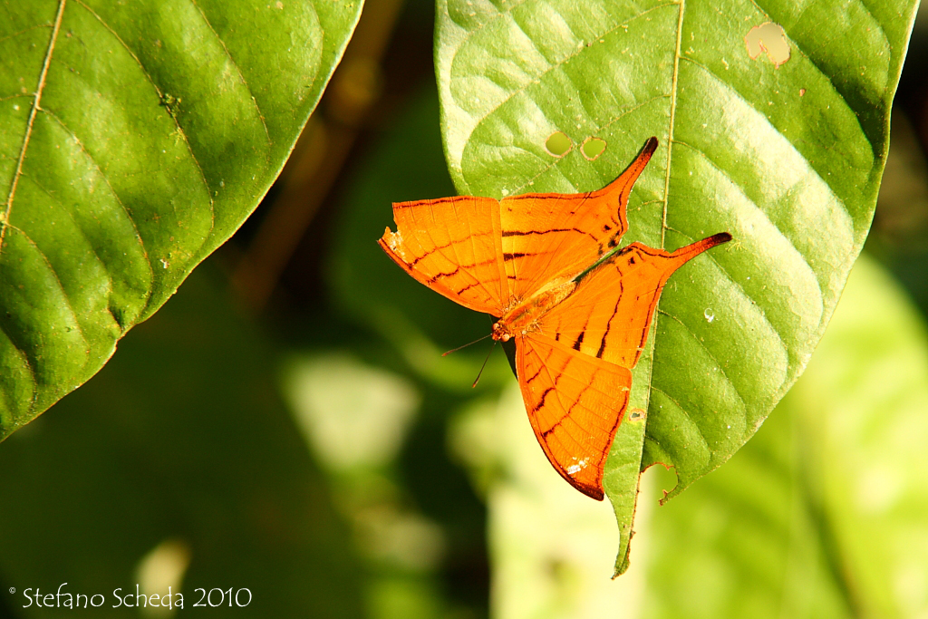 Butterfly - Peruvian Amazon
