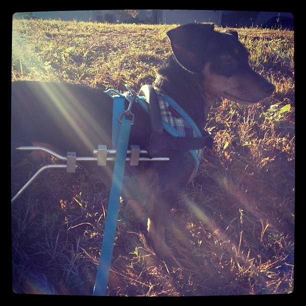 [306/366] Sunbeam Dog