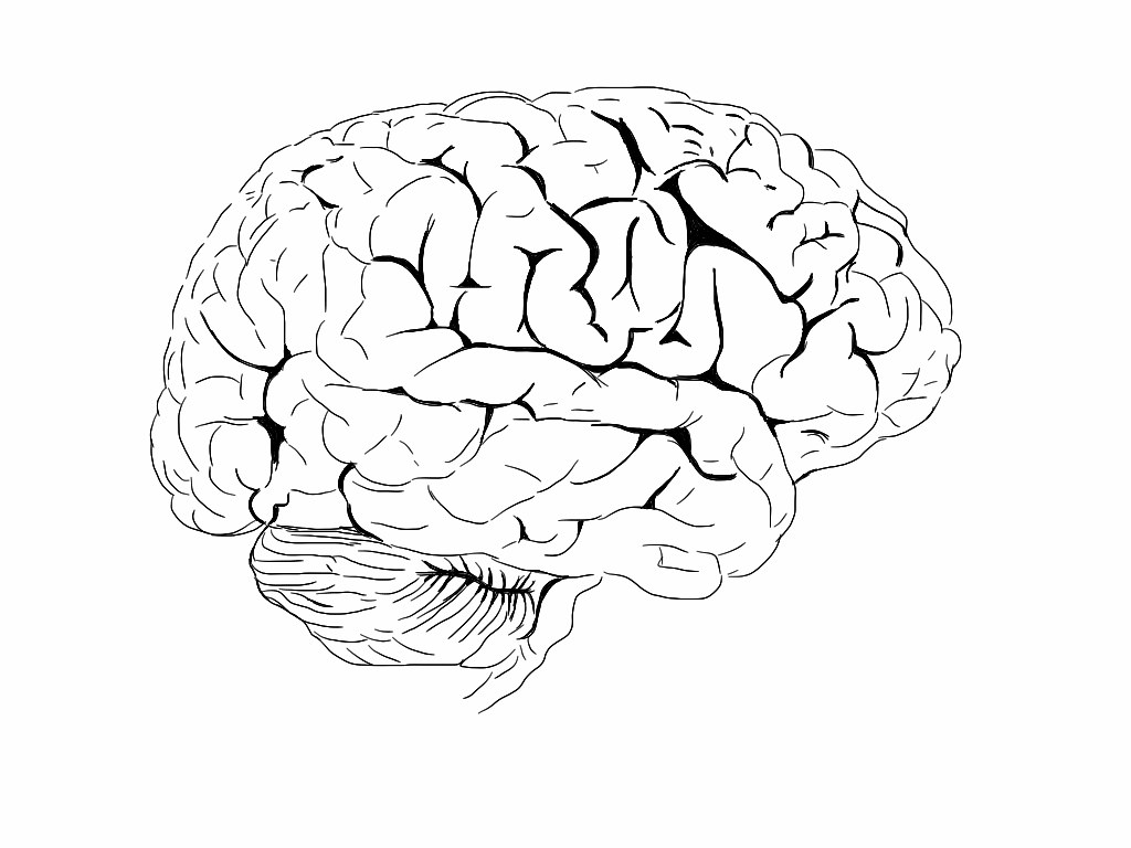 Brain Colouring Book Flickr