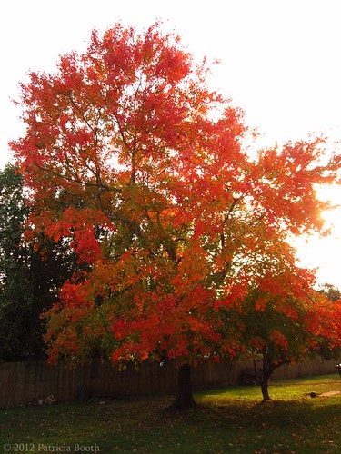Day 288 Tree Afire by pixygiggles