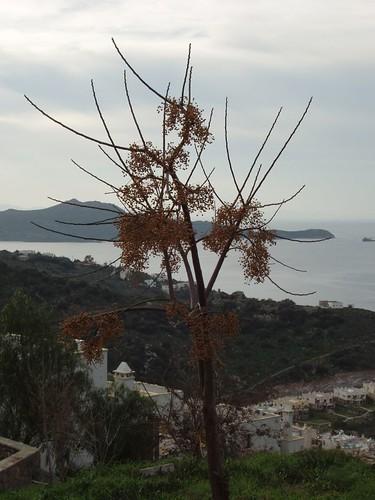 200601040080_tree_silhouette