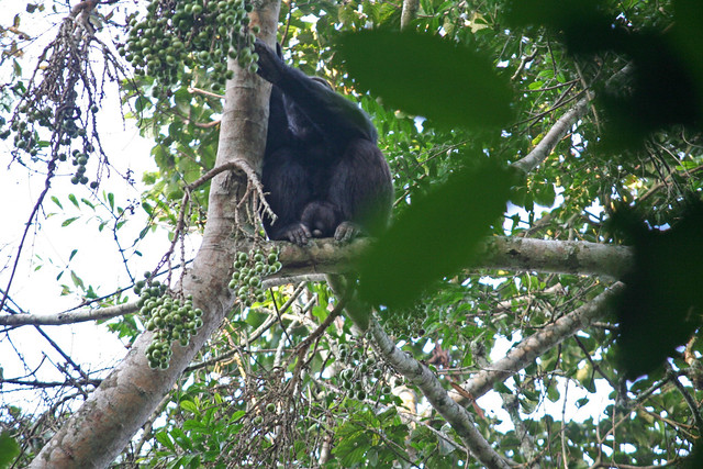 IMGchimp in a tree_1492