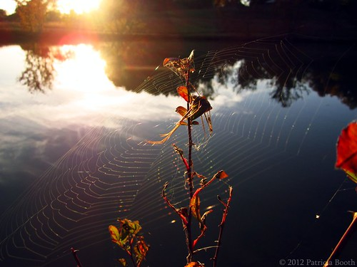 Day 296 Glistening Web by pixygiggles