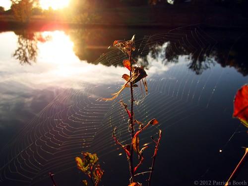 Day 296 Glistening Web by pixygiggles