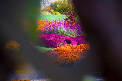 ColorfulFlowers